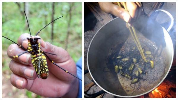 Đặc sản nhện rừng ở vùng rừng Bình Thuận