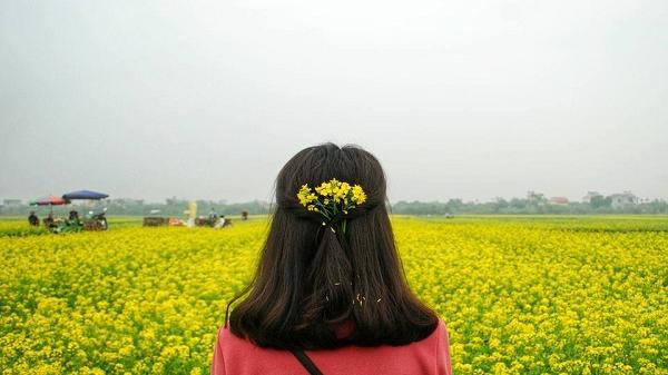 """""""Mùa đông không lạnh"""" bởi sắc hoa của nắng tràn ngập cánh đồng cải vàng ở Thái Bình"""