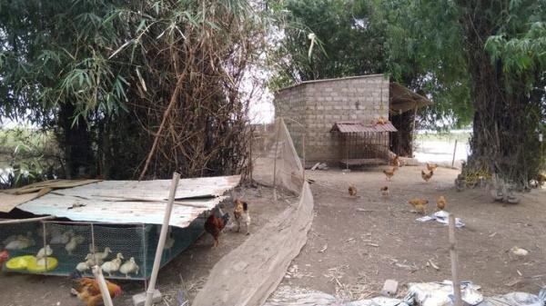 Nghi án người đàn ông tự vẫn do chăn nuôi thua lỗ ở khu vực bãi sông Thái Bình