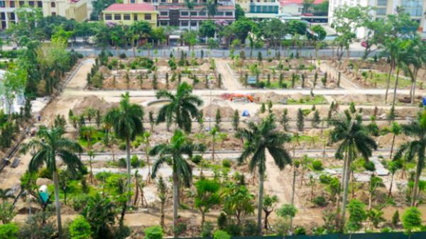Thái Bình: 360 cây xanh đã được trồng trong vườn hoa Lê Quý Đôn