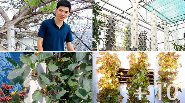 """Chàng trai Thái Bình sáng chế """"vườn rau trong không trung"""" giúp người thành thị ăn rau sạch quanh năm không xuể"""