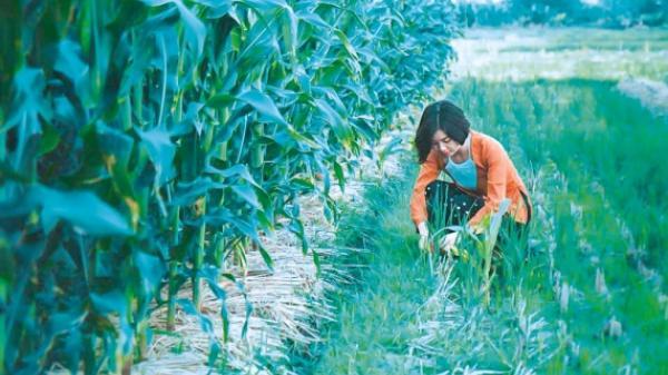 Thái Bình: Phát huy tiềm năng du lịch nông nghiệp