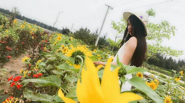 """Chẳng phải đi đâu xa ngay Thái Bình cũng có một """"đồi hoa mặt trời"""" đẹp đến mê mẩn"""