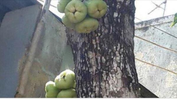 Bức ảnh cây roi hút nghìn like và lời chú thích gây tranh cãi