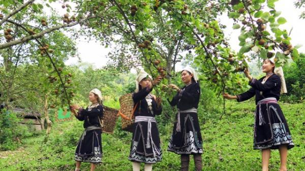 Tuyên Quang: Na Hang khai thác thế mạnh cảnh quan thiên nhiên phát triển du lịch sinh thái