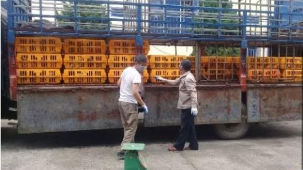 Cao Bằng: Tiêu hủy 1,1 tấn gà lậu có nguồn gốc Trung Quốc