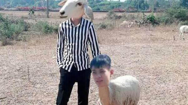 Thanh niên tạo dáng bên chú cừu đầy thần thái nhưng vẫn nhờ cư dân mạng sửa ảnh và cái kết buồn
