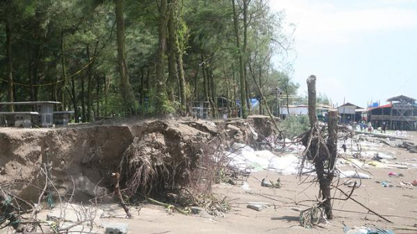 Nước biển cuốn bật gốc hàng loạt cây xanh rừng phòng hộ Thái Bình
