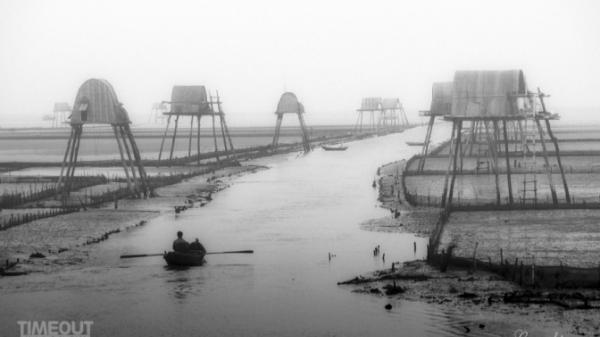 Những 'cánh đồng' trên biển Đồng Châu