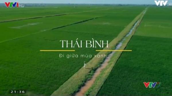 Đi giữa mùa xanh của vùng quê lúa Thái Bình