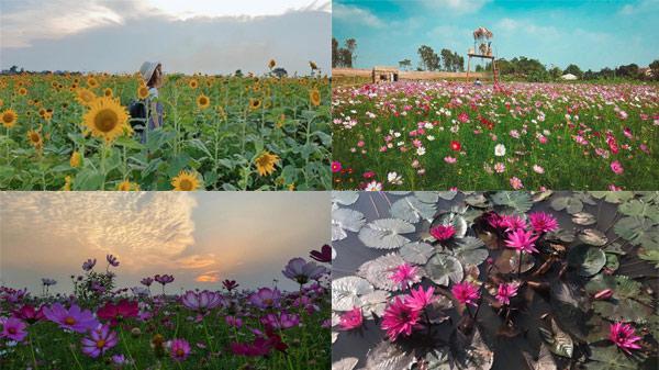 """Giới trẻ """"phát cuồng"""" với thảo nguyên hoa đẹp lung linh như khu vườn cổ tích ngay ở Thái Bình"""