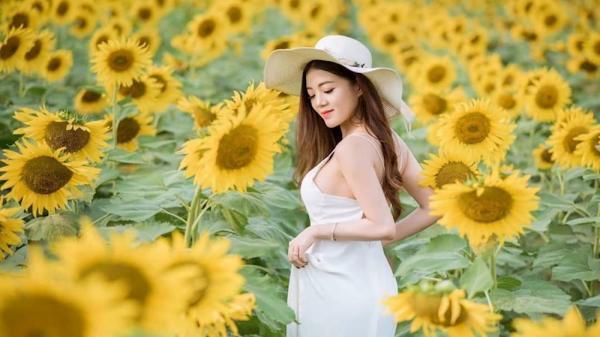 """Người đẹp Gia Lai khoe vẻ đẹp rạng rỡ giữa """"rừng"""" hoa hướng dương"""