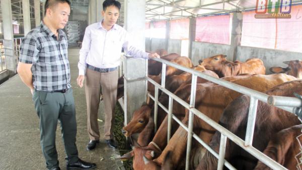 Chuyện lạ ở Thái Bình: Đại gia bất động sản về quê...chăn bò