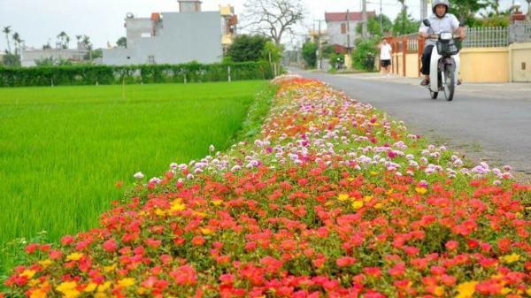 Thêm yêu quê hương khi ngắm những con đường hoa rực rỡ sắc màu ở vùng quê Thái Bình