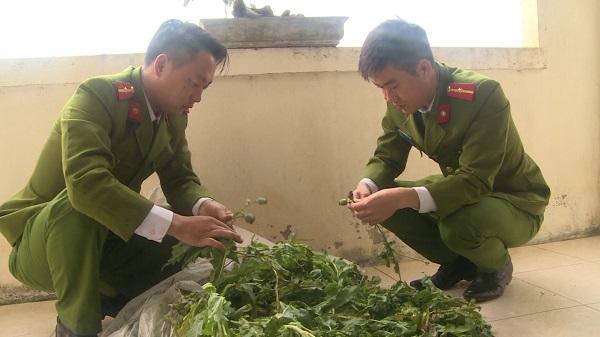 Công an huyện Kiến Xương: Thu giữ 113 cây thuốc phiện
