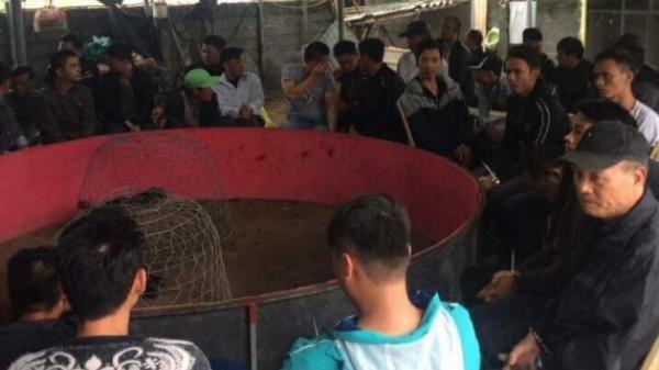 Thái Bình: Khởi tố các đối tượng đánh bạc dưới hình thức đá gà