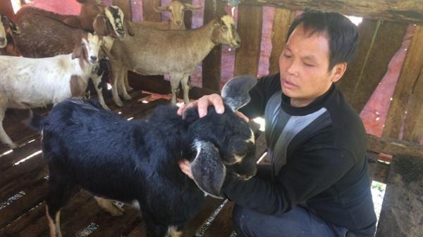 Thái Nguyên: Chung tay hợp tác phát triển đàn dê, người nông dân vươn lên làm giàu