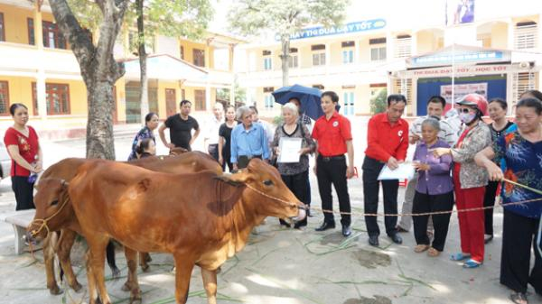 Tặng bò sinh sản cho cựu giáo chức có hoàn cảnh khó khăn