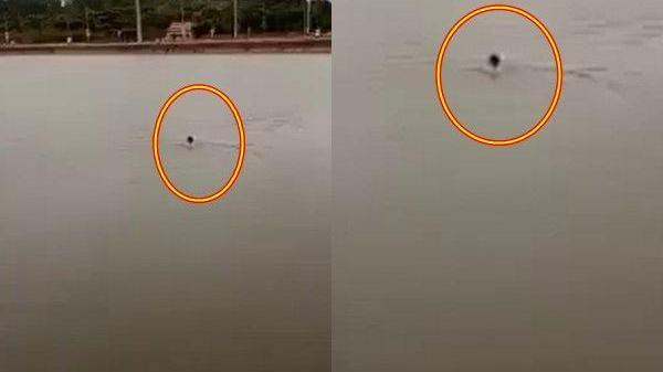 Bị thách bơi qua sông được cho 200k giữa trời mưa rét, thanh niên cứng cơ giữa dòng, vài phút sau...