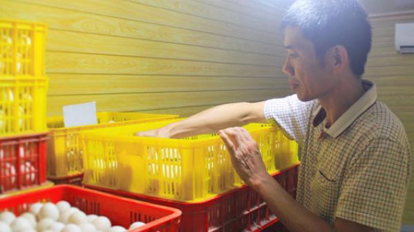 Thái Nguyên - trở thành tỷ phú nhờ nuôi vịt giống