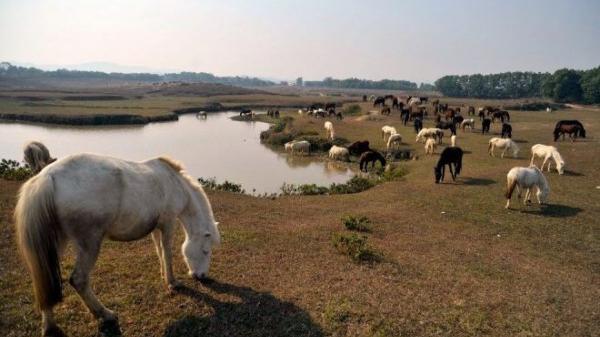 Tưởng Mông Cổ, hóa ra là trang trại ngựa lớn nhất Việt Nam tọa lạc ở Thái Nguyên