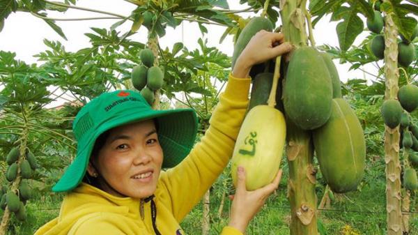 Trái cây in chữ 'Phúc - Lộc - Thọ'  độc đáo đắt hàng trước Tết