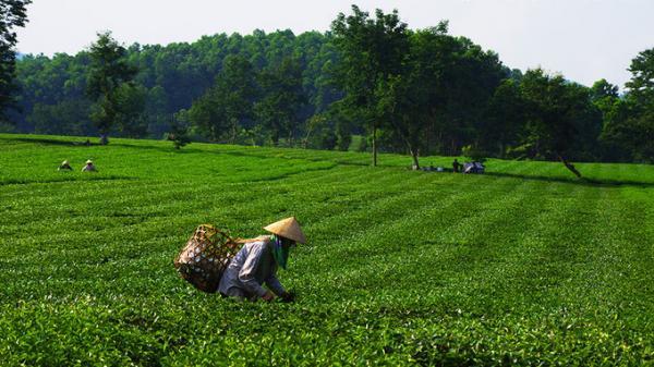 Non nước hữu tình của Bắc bộ Việt Nam