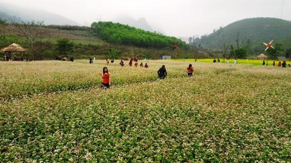 Cách Thái Nguyên không xa, có một thung lũng nơi hoa tam giác mạch nở trắng trời những ngày đầu xuân