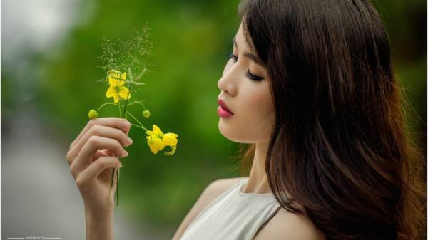 Người đẹp xứ Trà khoe sắc bên hoa muồng hoàng yến