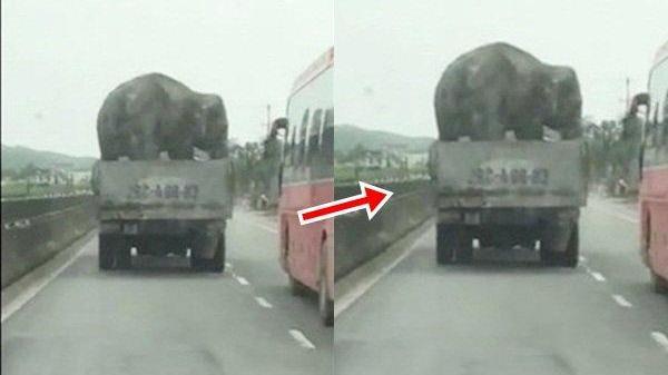 """Hú hồn xe tải chở voi """"diễn xiếc"""" trên Quốc lộ 1A"""