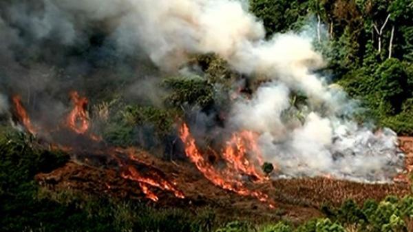 Thái Nguyên: Cháy khi xử lý thực bì khiến 3 người thương vong