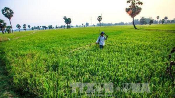 Thái Nguyên: Khó khăn trong xây dựng cánh đồng mẫu lớn