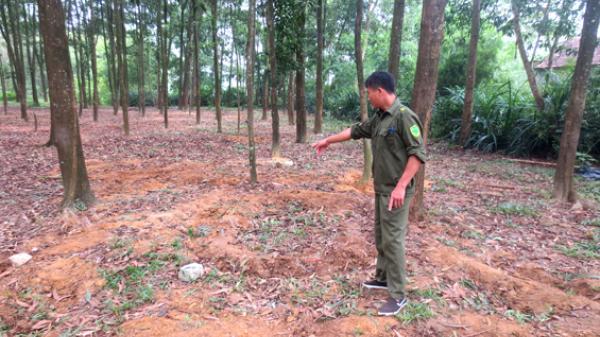 Phú Bình-Thái Nguyên: 1 chiến sĩ bị sét đánh tử vong