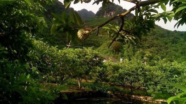 Võ Nhai (Thái Nguyên): Lên núi thu hoạch na, người đàn ông nghi bị sét đánh tử vong