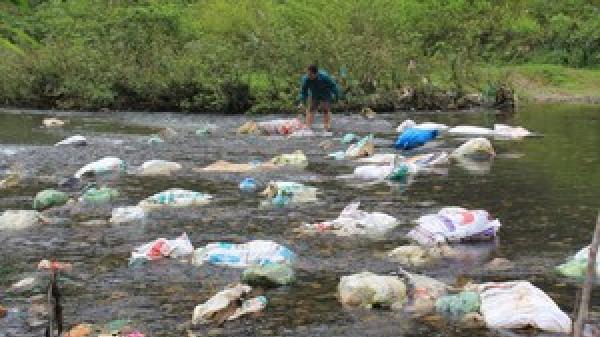 Thái Nguyên: X.ác lợn ch.ết trôi lềnh bềnh trên sông Dong