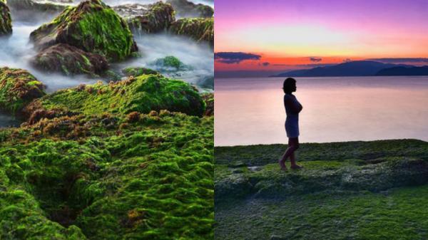 Nha Trang: Ngắm bãi rêu xanh tuyệt đẹp hút khách, truyền tai 1 nơi sống ảo mới