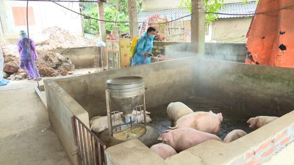 Phú Lương (Thái Nguyên) công bố xuất hiện bệnh dịch tả lợn châu Phi