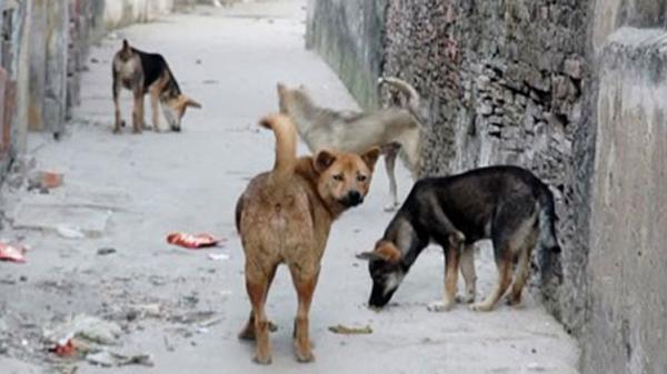 Bị chó của hàng xóm cắn, bé trai 10 tuổi t.ử v.on.g