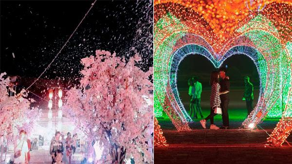 Lần đầu tiên tại Thái Nguyên: Lễ hội hoa anh đào và trình chiếu hiệu ứng ánh sáng nghệ thuật siêu hoành tráng