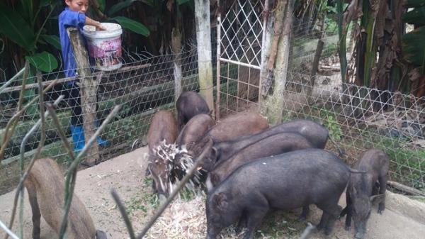 Thái Nguyên: Nuôi động vật bản địa bằng thức ăn tự nhiên, doanh thu hơn 1 tỷ đồng/năm