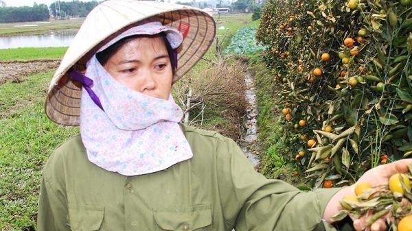 Thanh Hóa: Tìm ra 4 nghi phạm vụ kẻ gian phá hoại hàng trăm cây quất Tết của nông dân nhờ bỏ phiếu kín