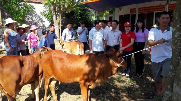 """""""Ngân hàng bò'' - trao cơ hội thoát nghèo bền vững, vươn lên làm giàu"""