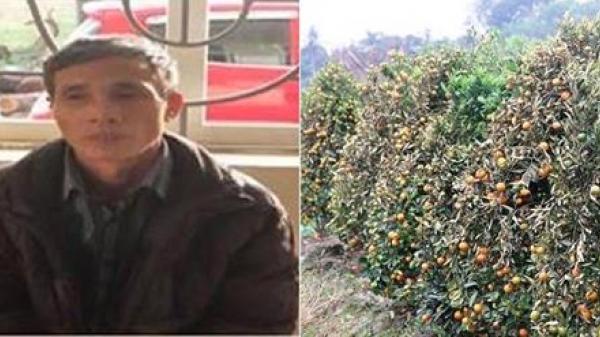 Thanh Hóa: Kẻ hủy hoại 400 gốc quất cảnh lãnh án 30 tháng tù