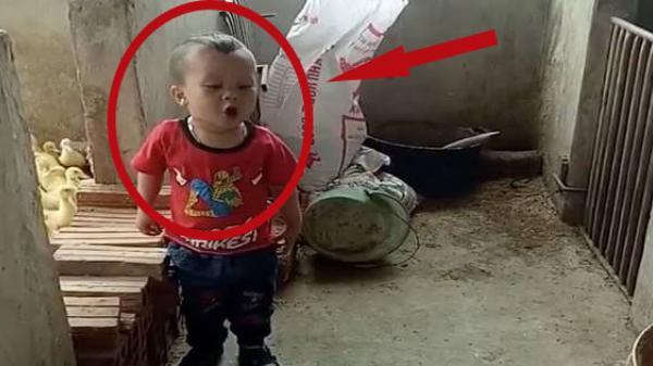 Clip: Bé trai 3 tuổi nói chưa sõi đứng mắng chó té tát khiến dân tình ôm bụng cười