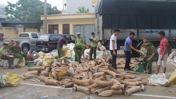 Thanh Hóa bắt giữ vụ vận chuyển ngà voi lớn nhất từ trước tới nay