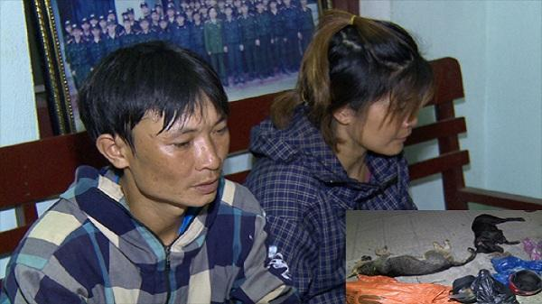 Thanh Hóa: Hai vợ chồng rủ nhau đi bắt trộm chó