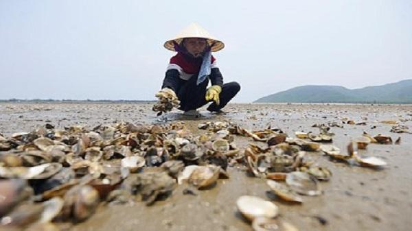 Ngao chết hàng loạt tại Thanh Hóa: Công an xem xét xử lý hành vi xả thải ra biển