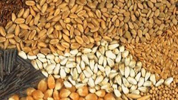 Xuất cấp hạt giống cây trồng hỗ trợ 3 tỉnh thiệt hại do thiên tai