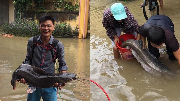 Người dân lội trong biển nước bắt được cá khủng nặng hơn 10kg, dài hơn 1 mét