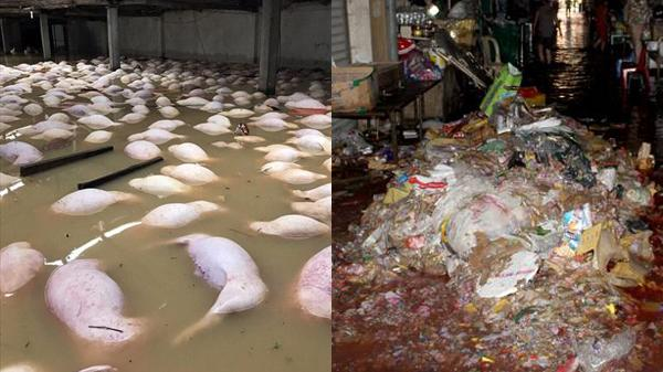 """ĐIỂM TIN NÓNG CÁC TỈNH TRUNG BỘ (7-14/10): Trại lợn gần 4000 con bị """"xóa sổ"""", nữ phượt thủ tử vong vì lũ cuốn"""